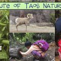 Field Institute of Taos NATURE CHALLENGE!